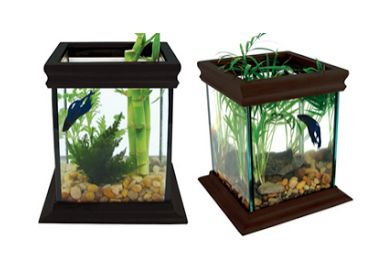 Model Aquarium Toples Unik Harga Murah