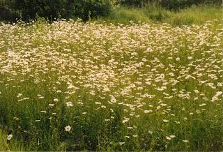 Alkaline meadow