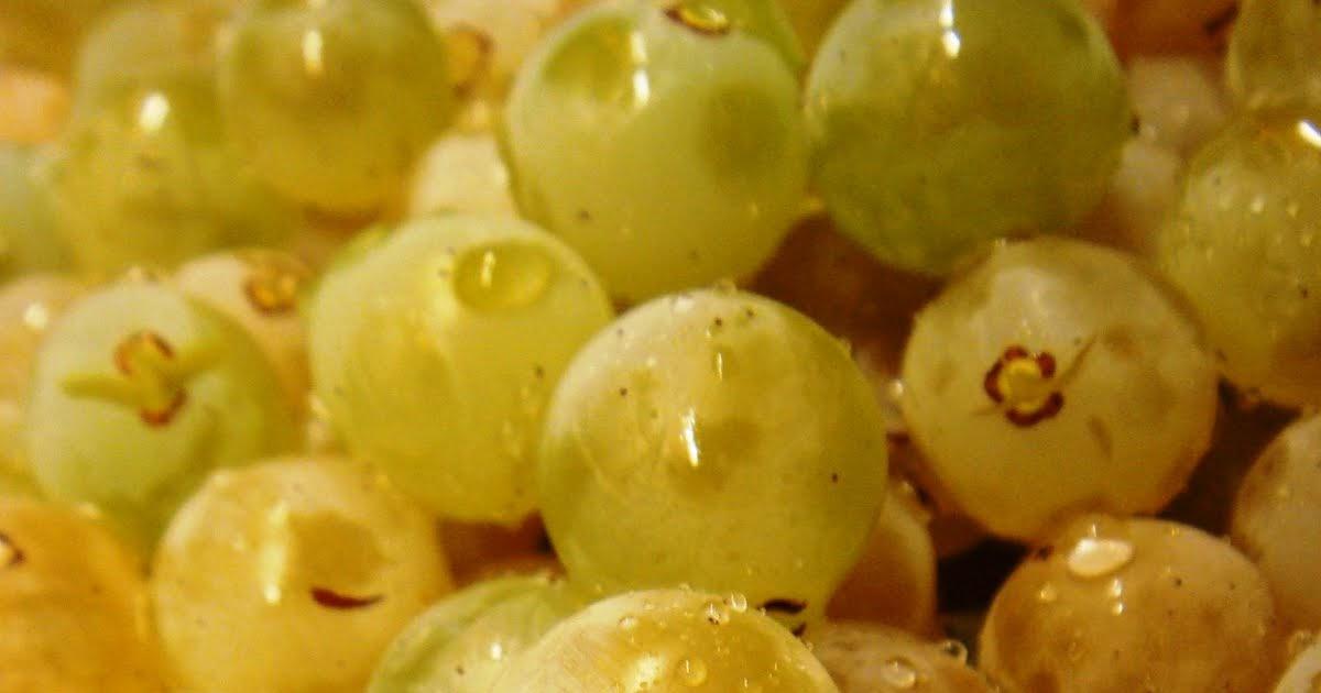 Mod stia q b depois da vindima n o h s a pisa da uva for Cerca b b