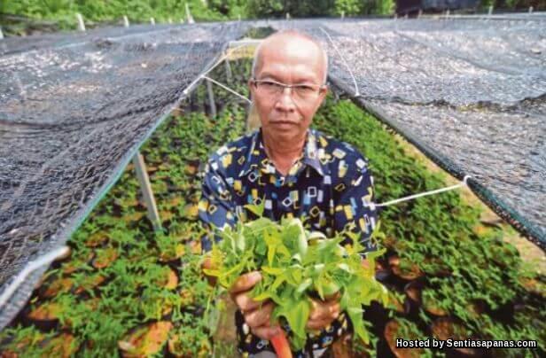 Pakcik Khamarul Herba Rerama