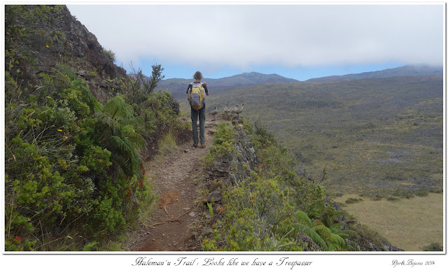 Halemau'u Trail: Looks like we have a Trespasser