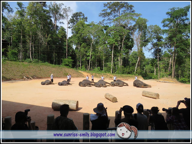 All about Elephants @ Kenyir Elephant Village, Terengganu