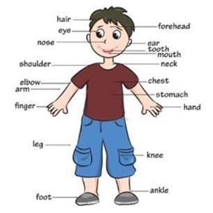 Materi bahasa inggris kelas 3 SD part of body