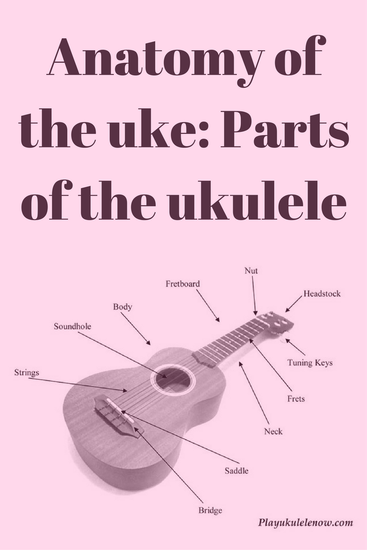 Anatomy of the uke: Parts of the ukulele