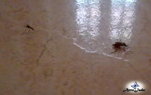 Dicas para se proteger da dengue e da zica