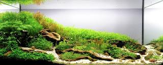 Những hồ thủy sinh đẹp trồng cây cắt cắm