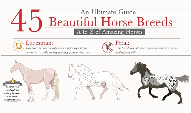 45 Beautiful Horse Breed A to Z of Amazing Horses #infographic