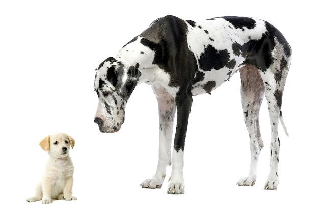 Grote en kleine hond op een witte achtergrond