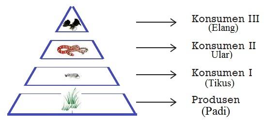 Keseimbangan Ekosistem