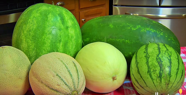 There are several types of melon. The most popular are listed below Honeydew – long, oval-shaped melons with dark green skins; the flesh is white with a greenish tinge. Charantais – small and round with a mottled green and yellow skin; the flesh is orange colored. Cantaloupe – large round melons with regular indentations; the rough skin is mottled orange and yellow and the flesh is light orange in color. Ogen – small round mottled green skins, each suitable for one portion (depending on size); mainly used as a dessert, hors d'oeuvre on in sweet dishes.