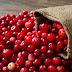 La cranberry et ses vertus : Système urinaire et digestif