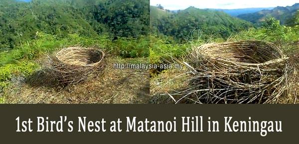 Bukit Matanoi Sarang Burung
