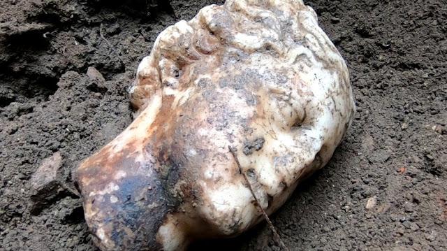 Marble head of Aphrodite found in Ostia Antica