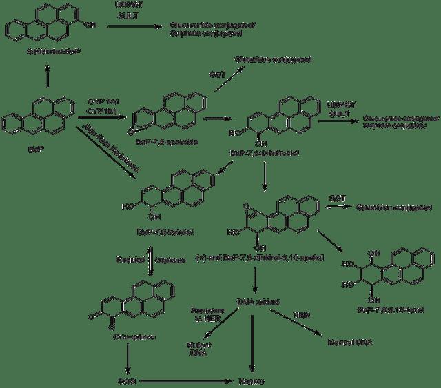 Metabolisme Senyawa Karsinogen