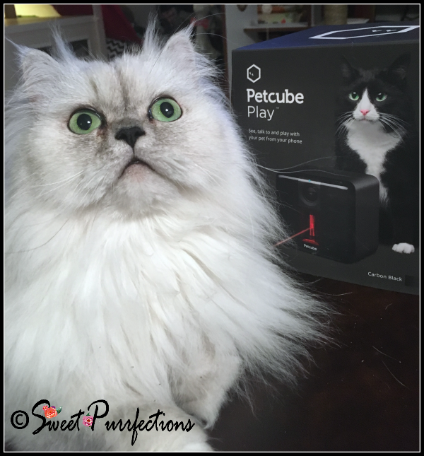 Truffle and the Petcube Play box