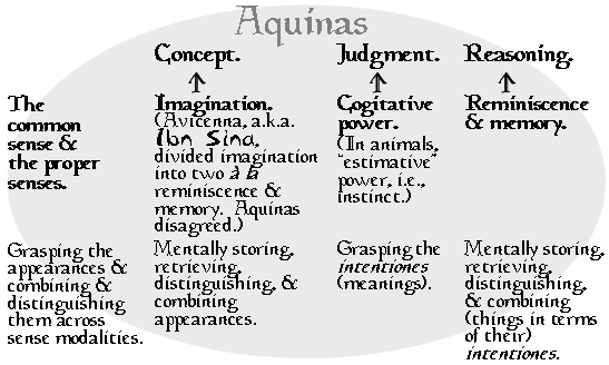 Aquinas. The Common Sense & the Proper Senses. Grasping appearances & combining & distinguishing them across sense modalities. Concept. ← Imagination. (Avicenna, a.k.a. Ibn Sina, divided imagination into two à la reminiscence & memory. Aquinas disagred.) Mentally storing, retrieving, distinguishing, & combining appearances. Judgment. ← Cogitative power. (In animals, 'estimative' power, i.e., instinct.) Grasping the _intentiones_ (meanings). Reasoning. ← Reminiscence & memory. Mentally storing, retrieving, distinguishing, & combining (things in terms of their) _intentiones_.