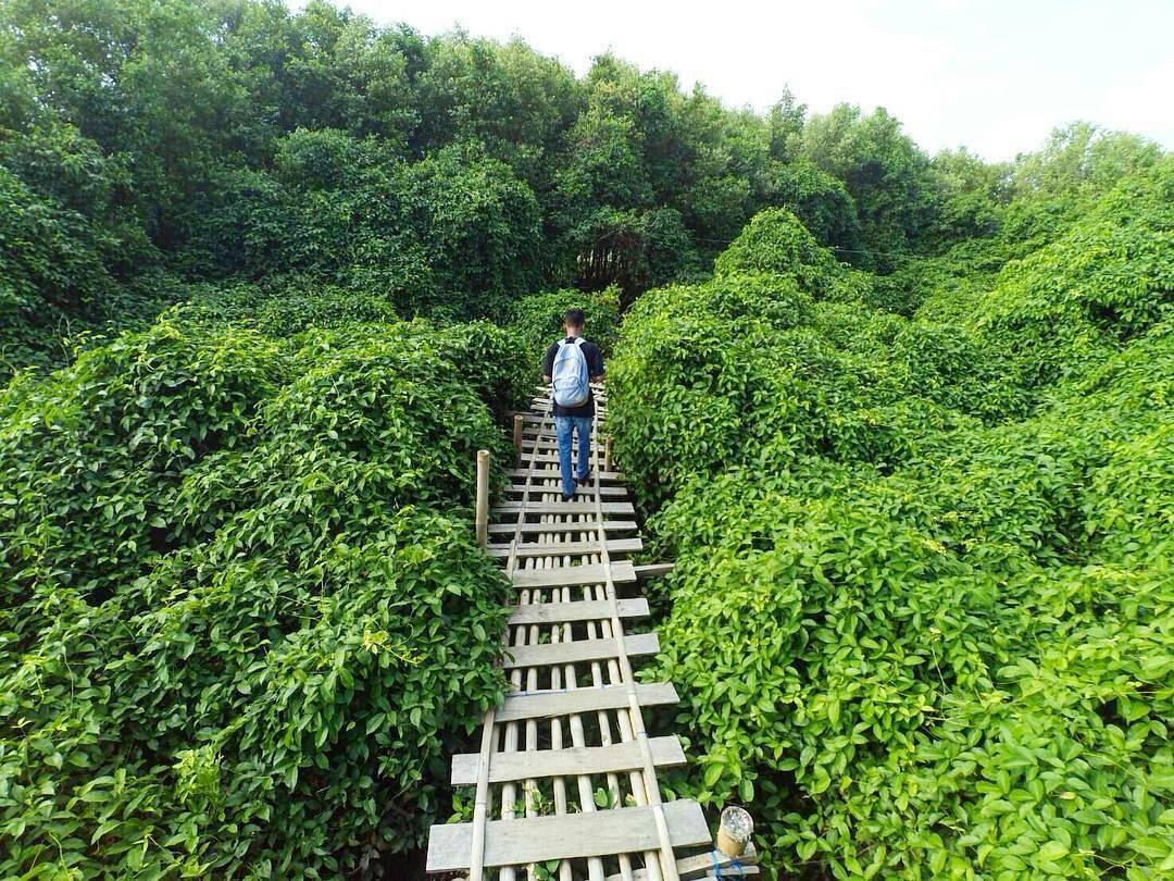 8 Hutan Mangrove Indonesia - Indonesian Climbing Record