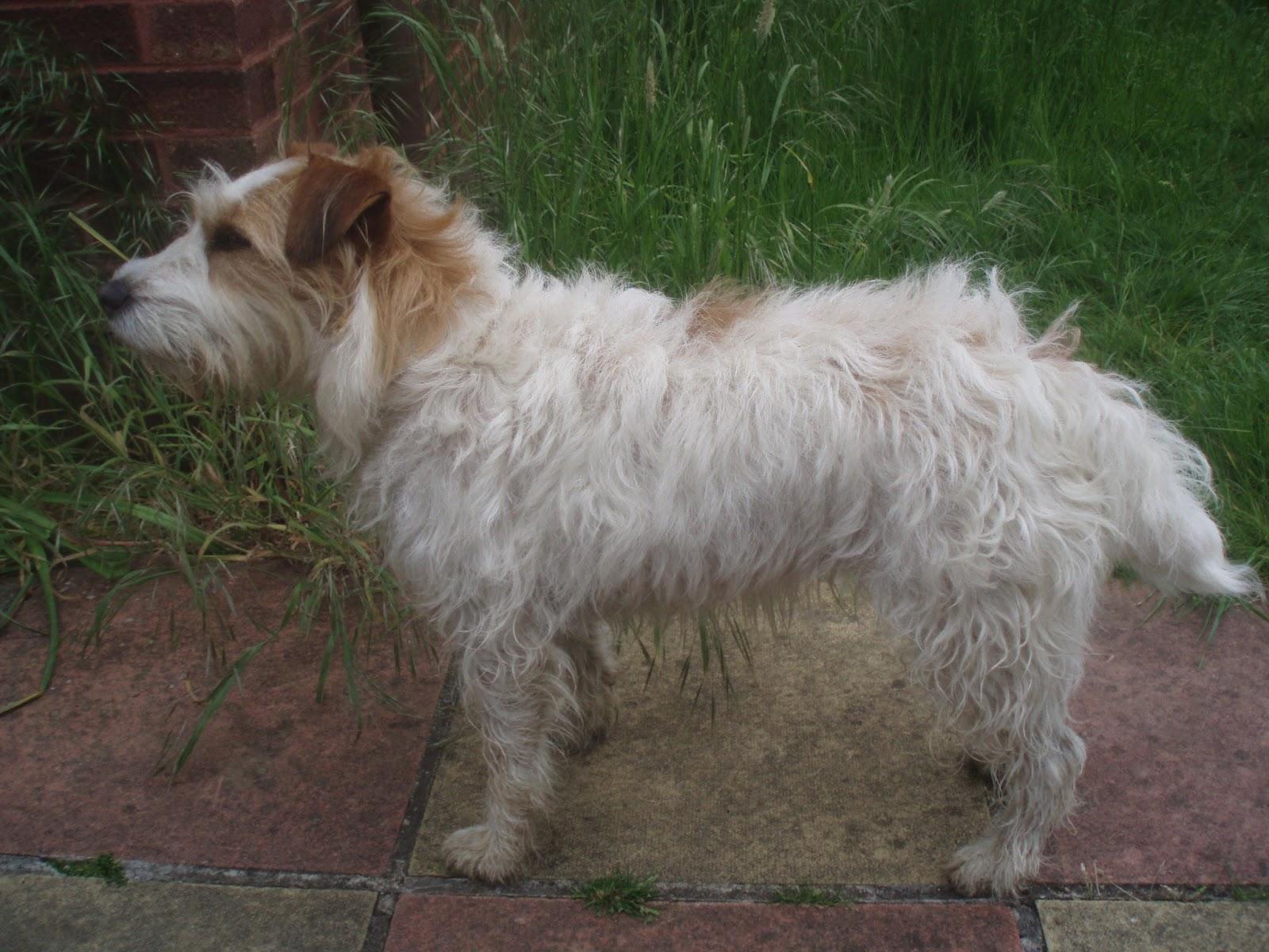 The Algernon Trust Rescue Amp Rehoming Sanctuary Dogs
