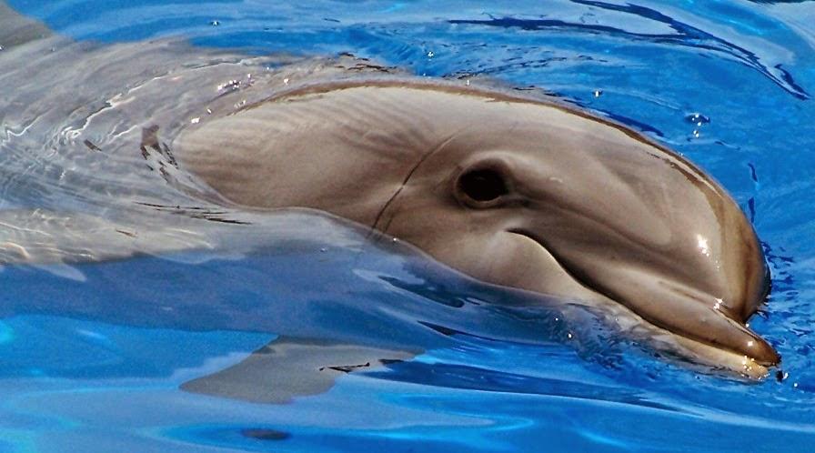 imagenes de delfines sonriendo