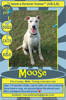 Adopt Moose flyer from Pose-a-Pet
