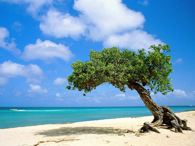Beautiful Aruba Island