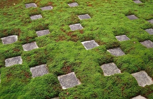 com decor Tipos de Jardim Japonês