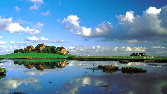 جزر الأهوار.. رحلتك نحو سحر الطبيعة والجمال
