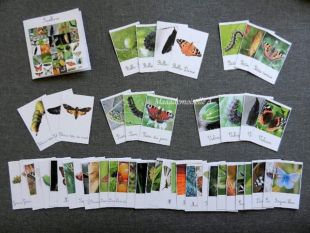 || Cartes de nomenclature : Papillons