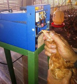 pemotongan paruh dengan debeaker untuk mencegah kanibalisme ayam