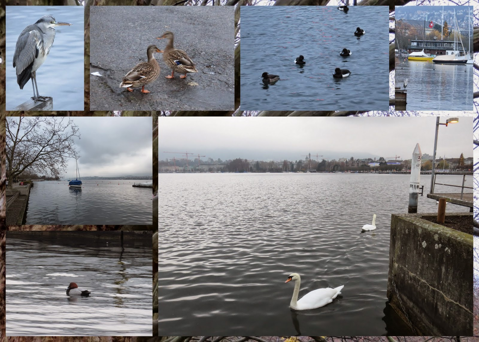 Birdwatching on Zurich See