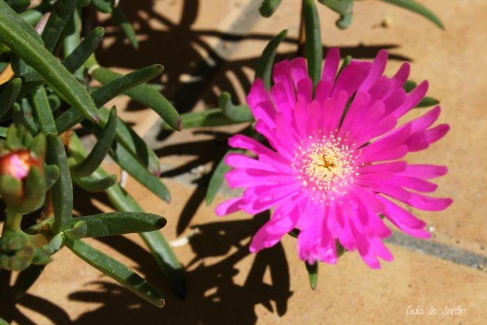 Las Plantas Suculentas Y Sus Flores Guia De Jardin