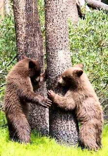 Bear tree pushers