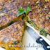 Tortilla de grelos, setas, gambas y cebolla caramelizada
