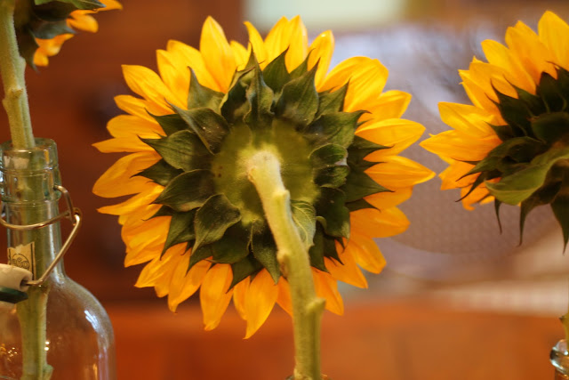 image of back of sunflower