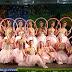 Ballet As Quatro Estações em Ji-Paraná