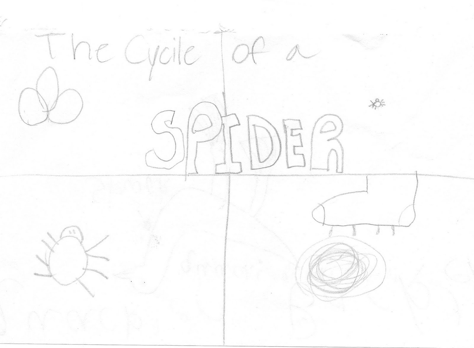 Controlling My Chaos: The Life Cycle of a Spider and Other