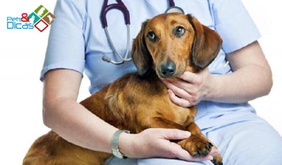 Ração para cães com problema hepático