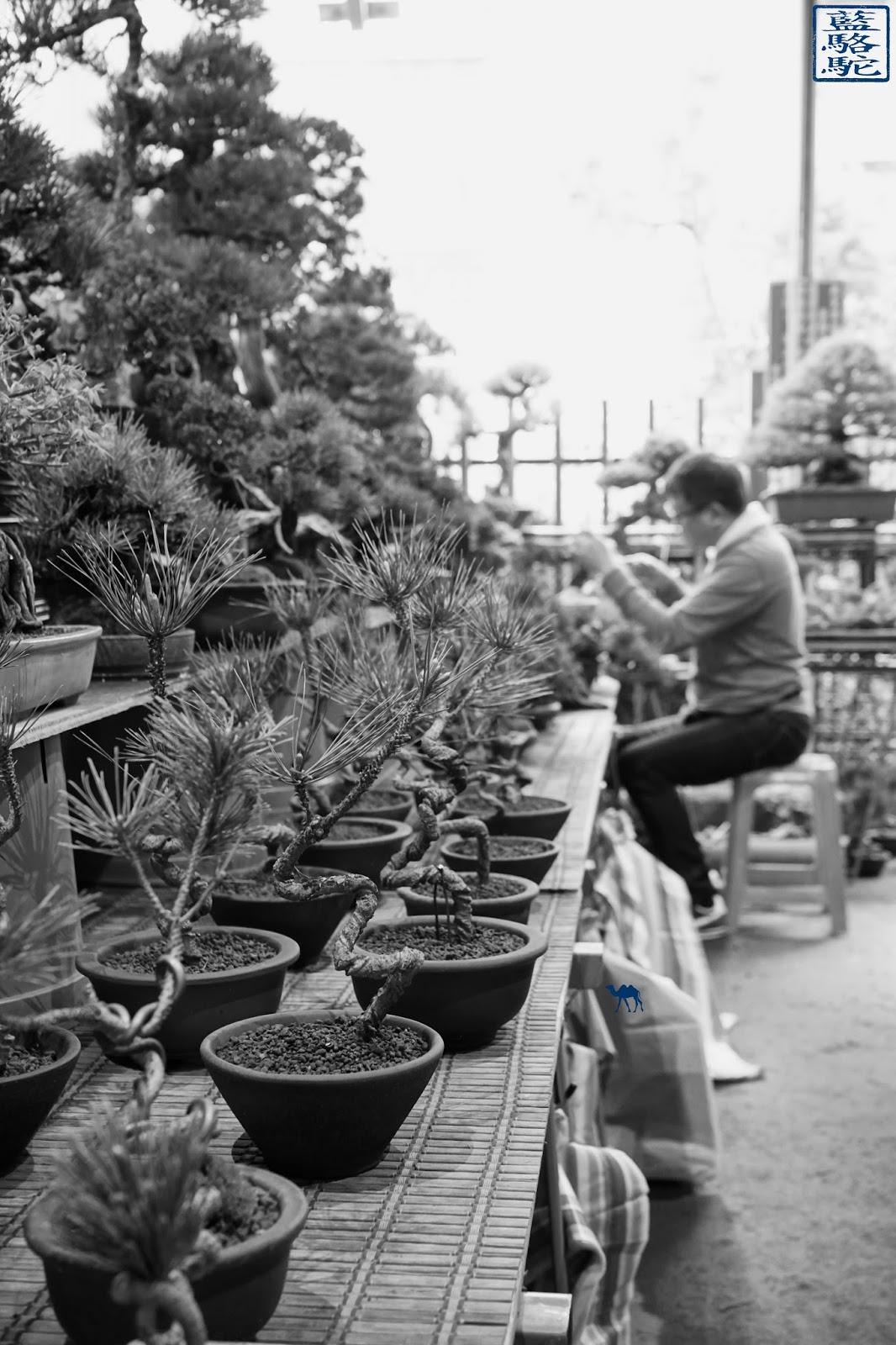 Le Chameau Bleu - Voyage à Taiwan - Bonsai du marché aux fleur de Taipei