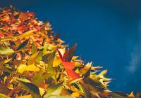 foglie nel cielo la misericordia di Dio è il suo giudizio che si scopre nella preghiera
