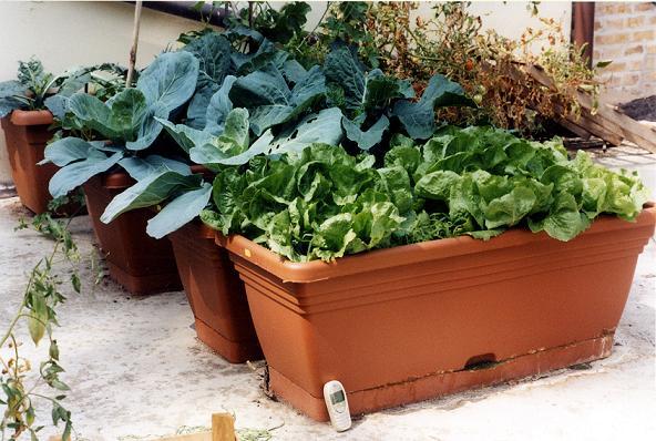 Come fare un orto in balcone giardino o terrazzo il cibo
