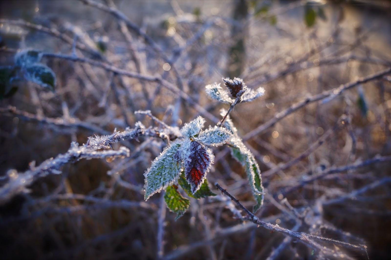 frost födelsedag Malin Rauhala   Google+ frost födelsedag