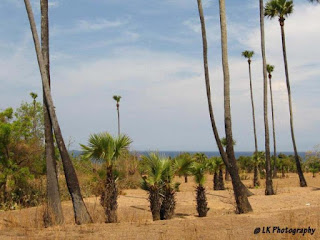 Padang Pasir Pantai Tulamben, Bali
