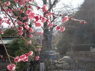 光触寺の梅