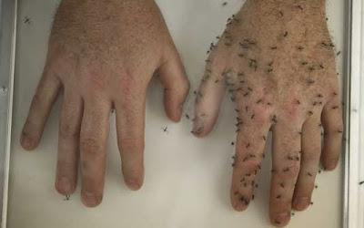 Repelente caseiro contra insetos