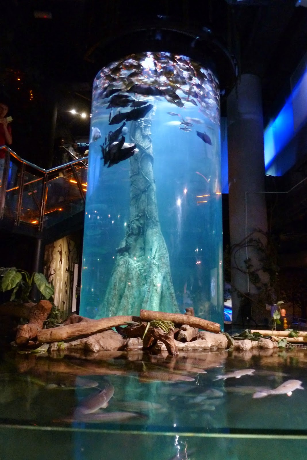 Kee Hua Chee Live Aquaria At Suria Klcc Is One Of The