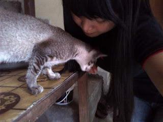 10 Cara Melatih Kucing Agar Nurut, Pintar dan Jinak