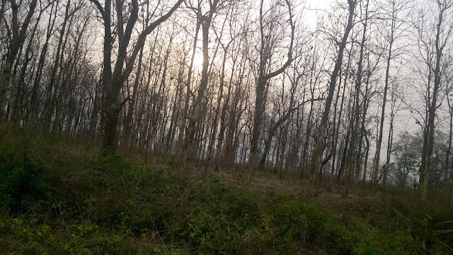 Corbett, Deciduous trees,