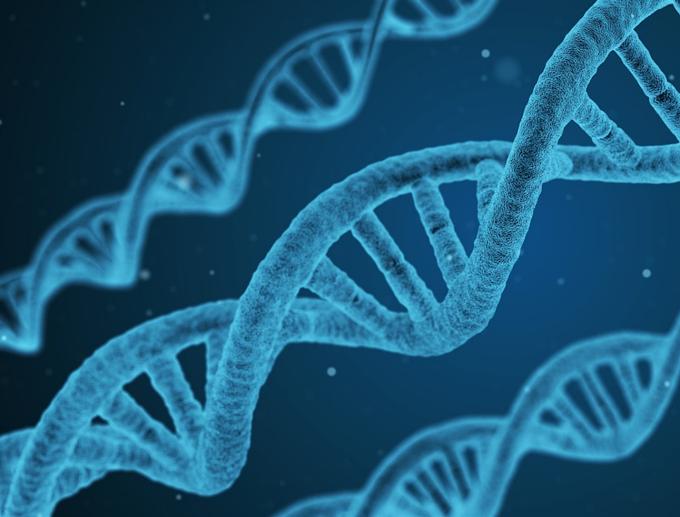 Genética | Lei da Segregação