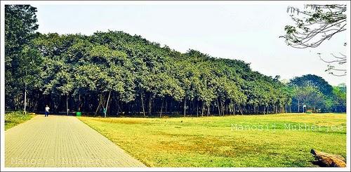 10 Inspirational Botanic Gardens | Acharya Jagadish Chandra Bose Indian Botanic Garden, Kolkata, India