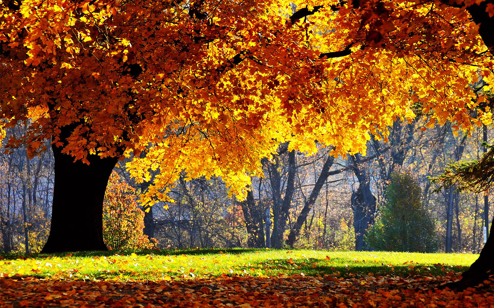 scenery autumn wallpapers backgrounds fall desktop scenic pretty scenes scene tree trees nature tag leaves november landscape widescreen 3d wide